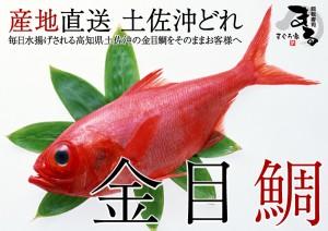 高知県土佐沖のとっておきの厳選金目鯛